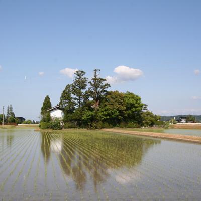 写真:人の営みと自然が一体となって、景観をつくる(砺波平野の屋敷林)